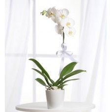 zarif orkide tekli beyaz